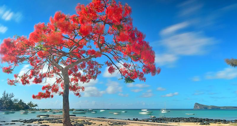 Playtouch Mauritius Flamboyant